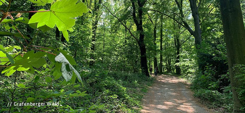 Grafenberger-Wald1